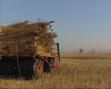 Trailer loaded with reed bundles in Kinderdijk polder landscape + pan mowed reed Stock Footage