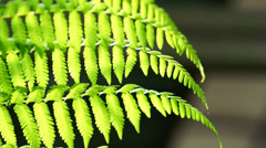 Sunny green tropical fern Stock Footage