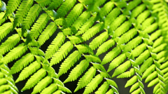 Green fern in a tropical climate - stock footage
