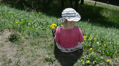 Girl child pick yellow sowthistle flowers Stock Footage