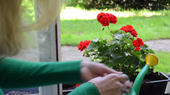 Housekeeper girl with watering-can  water flower on window sill Stock Footage