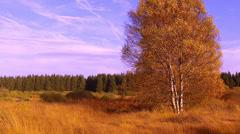Autumn in High Fens – Eifel Nature Park. Stock Footage