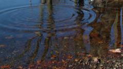 Pebble creates Ripples across Pond Stock Footage