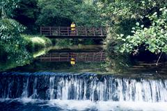 Woman on footbridge over forest waterfall amid foliage Stock Photos