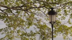 Colonial iron street light and tree branch Stock Footage