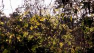 Stock Video Footage of Midges in Hedgerow