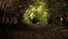 A Natural Tunnel Created by Arched Rows of Trees and Bushes Stock Footage