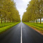 straight empty wet road between trees. loire valley. france. - stock photo