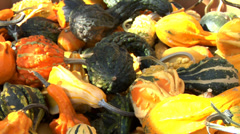 Gourds at Pumpkin patch - stock footage
