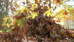 Young girl playing in leaves Stock Footage