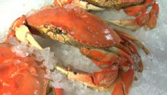 Fresh Crabs on Ice Stock Footage