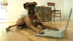 Dog sitting on floor with laptop computer Stock Footage