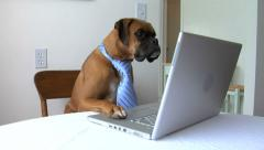 Dog with tie sitting at computer Stock Footage