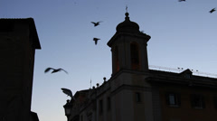 Thousands of starlings over Rome 131 Stock Footage