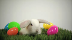 Easter bunny - stock footage