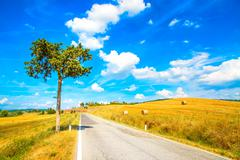 tuscany, lonely tree and straight road. siena, val d orcia, italy. - stock photo