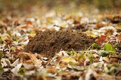 molehills in garden - stock photo