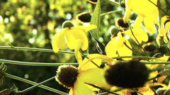 Close up of yellow flowers Stock Footage