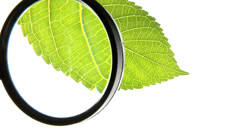Looking at leaf through a magnifying glass Stock Footage