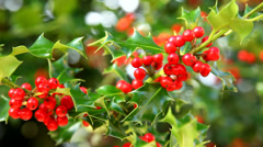 Close up of red holly berries Stock Footage