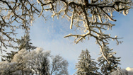 Stock Video Footage of Trees and snow in the winter