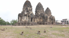 Monkeys at temple wide Stock Footage