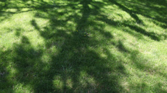 Time lapse of tree shadows on the grass Stock Footage