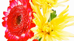 Red and orange gerbera tuberose and gold mums Stock Footage