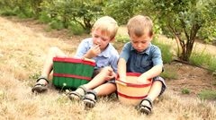 Two young boys eating blueberries Stock Footage