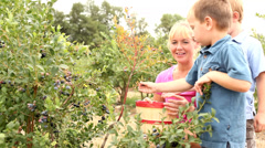 Picking blueberries together Stock Footage