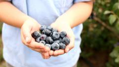 Boy holding blueberries in hands - stock footage