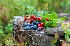 Wild berries on a green vegetative background in wood. Stock Photos