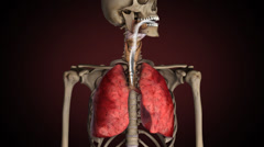 Lungs of smoker, turns from healthy to sick - stock footage