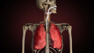 Stock Video Footage of Lungs of smoker, turns from healthy to sick