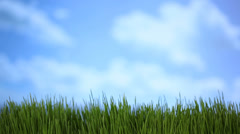 Grass and sky, time lapse Stock Footage