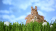 Stock Video Footage of Easter bunny sitting in grass with eggs