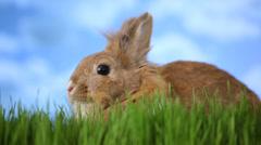 Rabbit sitting in grass Stock Footage