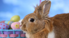 Bunny and Easter basket Stock Footage