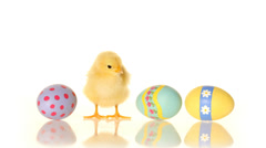 Easter eggs and baby chick Stock Footage