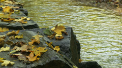 Stones covered with fallen acer leaves on the river bank - stock footage