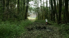 Old fence on edge of forest Stock Footage