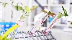 Scientist analyzing plants Stock Footage