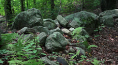 Lush mountain trail (4 of 7) Stock Footage