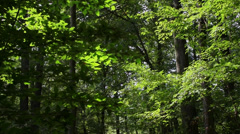 A hike in the deep woods (8 of 8) Stock Footage