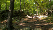 Stock Video Footage of Nature Conservancy Trail (3 of 9)