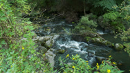 Stock Video Footage of Relaxing stream rushing over rocks (1 of 6)