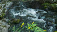 Stock Video Footage of Relaxing stream rushing over rocks (3 of 6)