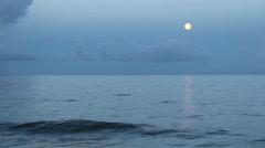 Dusk Dolphins - stock footage