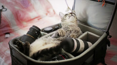 Photographer's cat Stock Footage