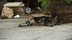 Italian Cat Resting in an Alley Stock Footage